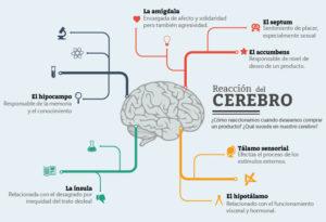 Proceso Neuromarketing